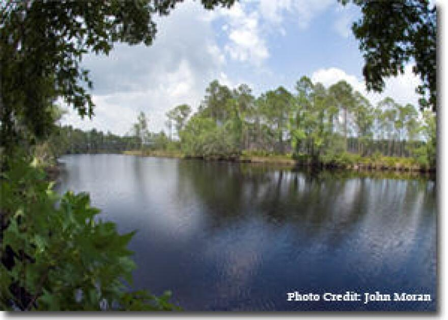 Tates Hell State Forest in Carrabelle was a Florida Forever project.