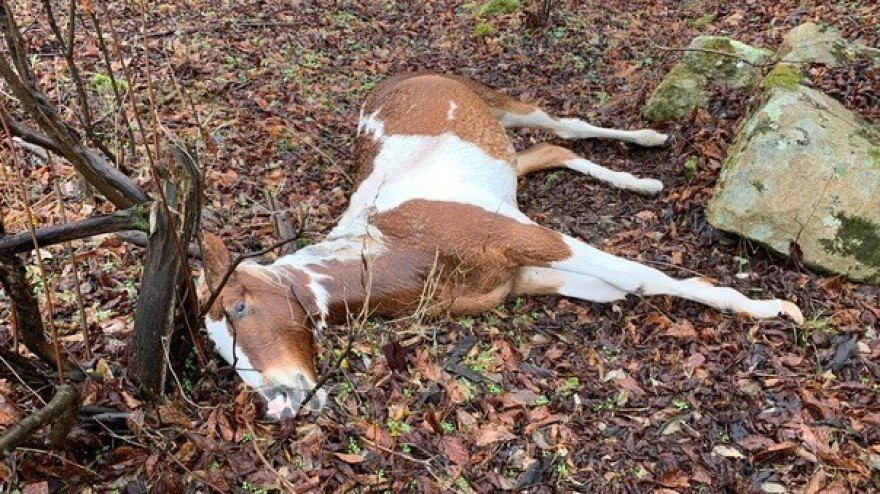 "Fifteen horses were shot and killed in Floyd County, Ky., in what one resident calls ""a very large act of evil."""