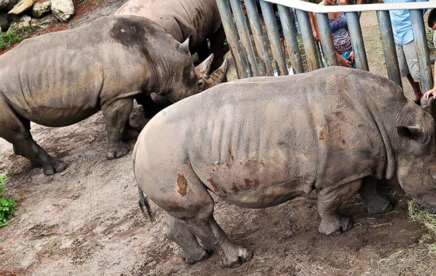 rhino_encounter_1-2-19.jpg