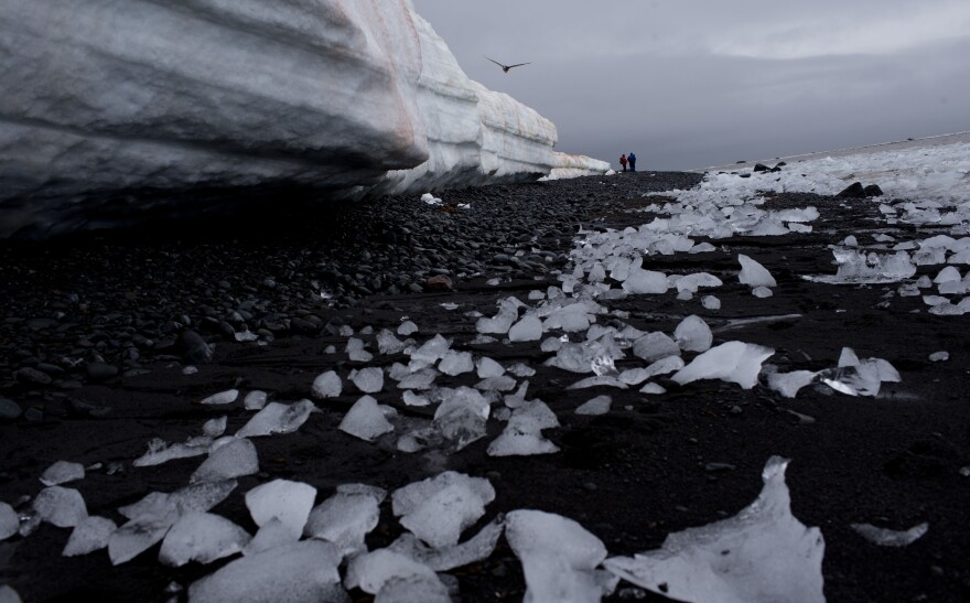 Pieces of thawing ice are scattered along the beachshore at Punta Hanna, Livingston Island, Antarctica.
