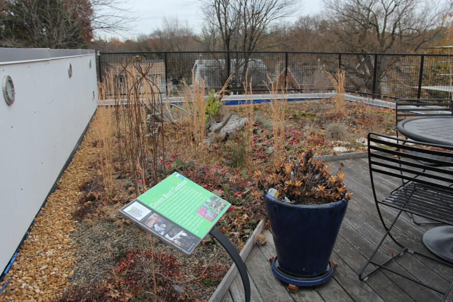 A rooftop rain garden at SWT Design, a landscape architecture firm in St. Louis.