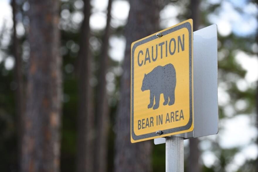bearhunting020620.JPG