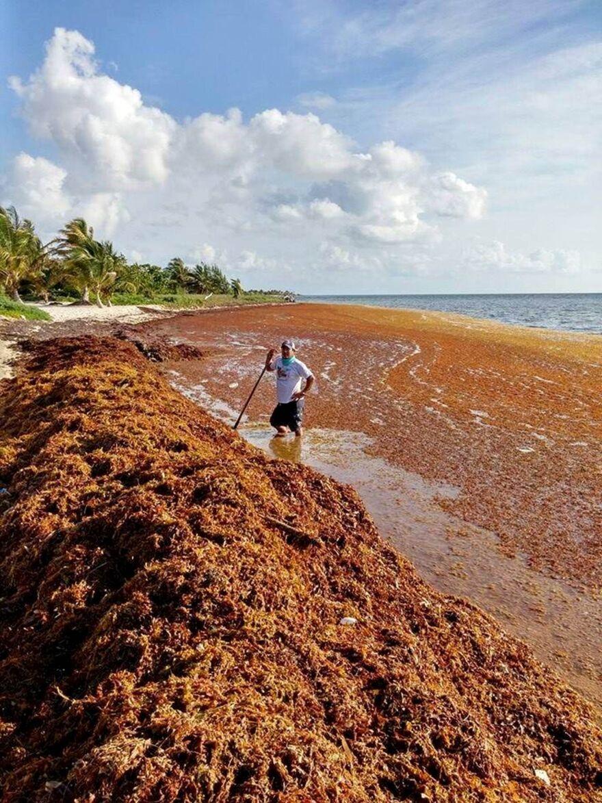 seaweed on beach.