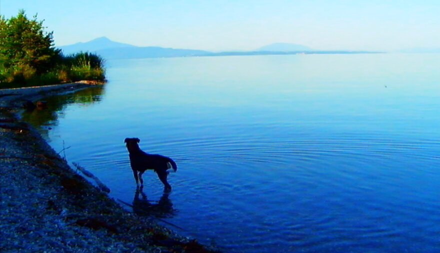 Jean-Luc Godard's dog, Roxy, is prominently featured in <em>Goodbye to Language, </em>wandering through the countryside, conversing with the lake and the river.