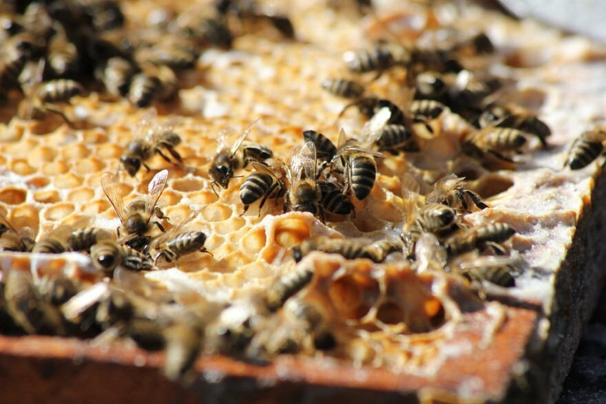 bees_and_honeycomb.jpg