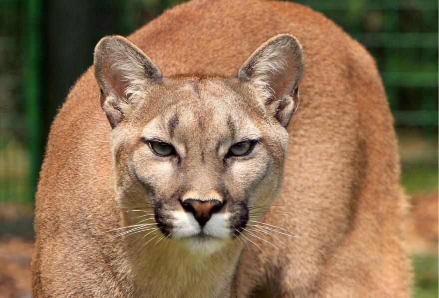animal-big-cat-close-up-53001.jpg