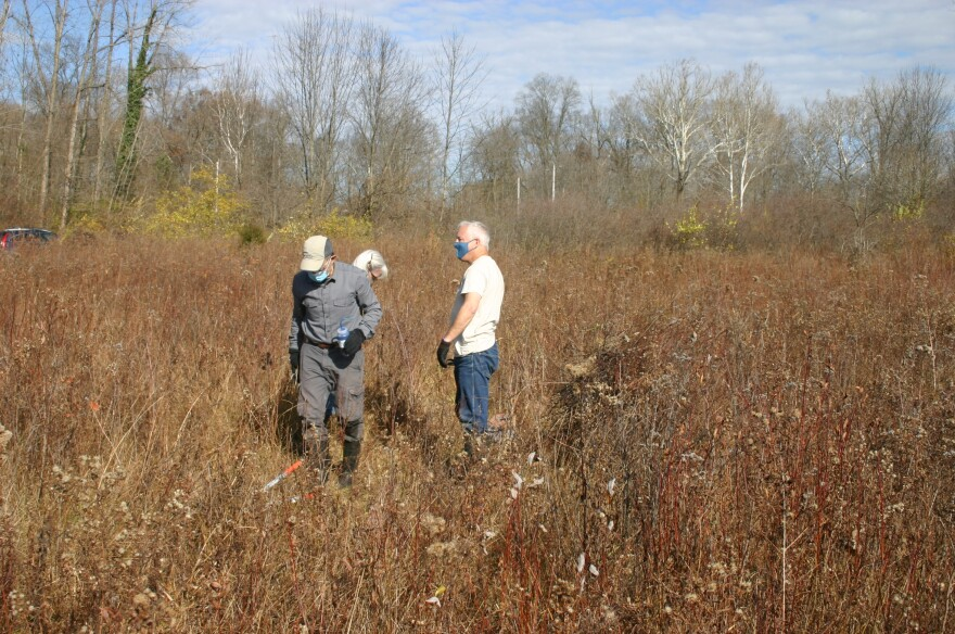 Volunteers cut trees that are threatening to shade out the eastern prairie fringed orchid