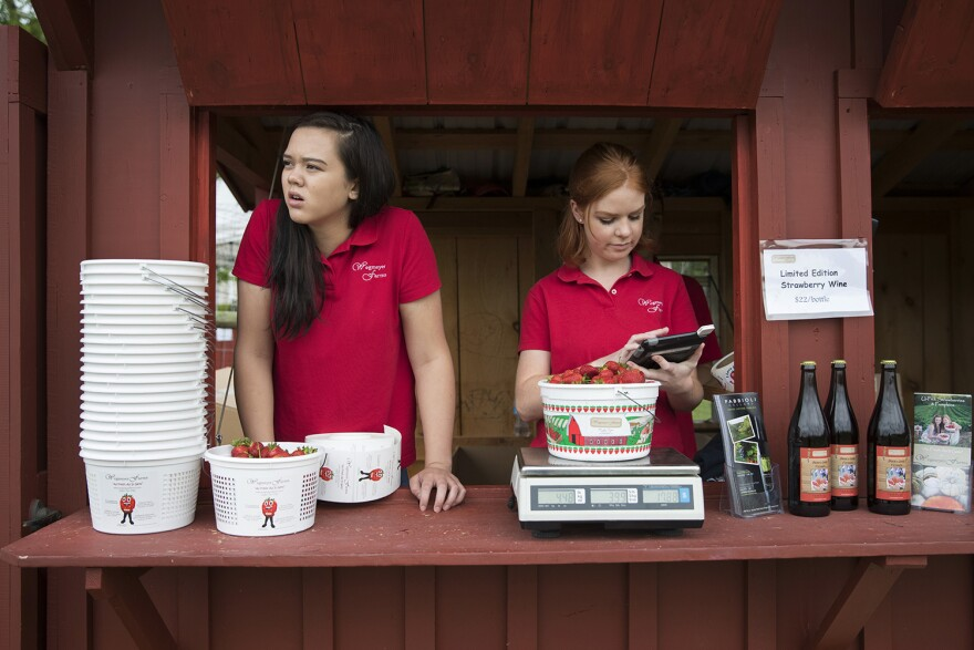 In this Tuesday, May 23, 2017, photo, Hannah Waring, left, a student at Loudoun Valley High School, and Abby McDonough, a student at Liberty University, work in the strawberry stand at Wegmeyer Farms in Hamilton, Va. (Carolyn Kaster/AP)