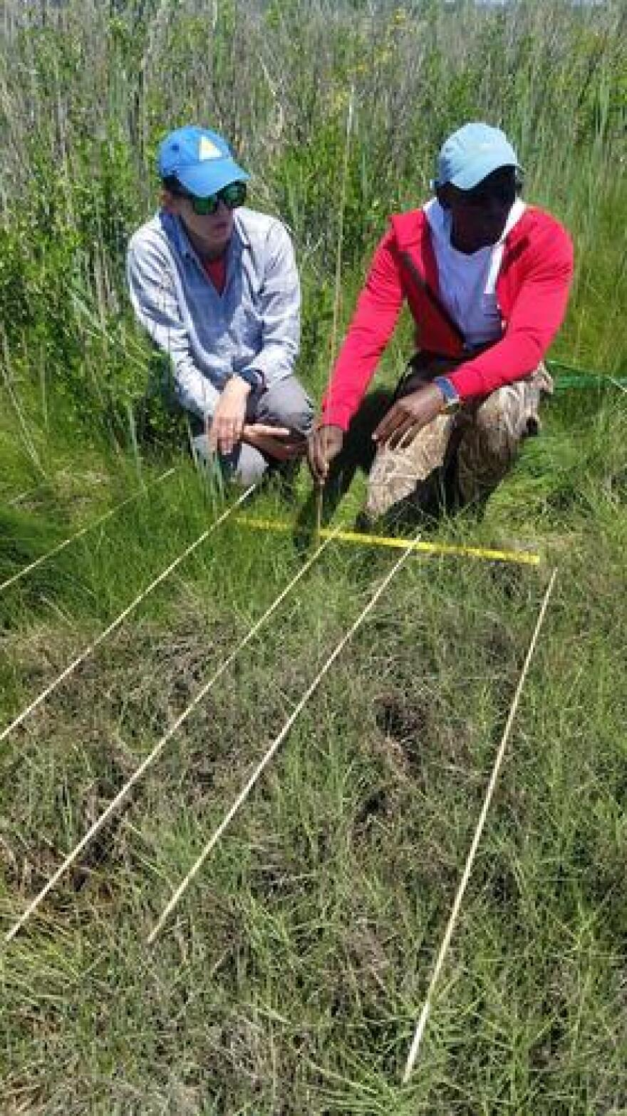 Measuring changes to marsh vegetation helps scientists with the Rhode Island Coastal Resources Management Council track marsh erosion.