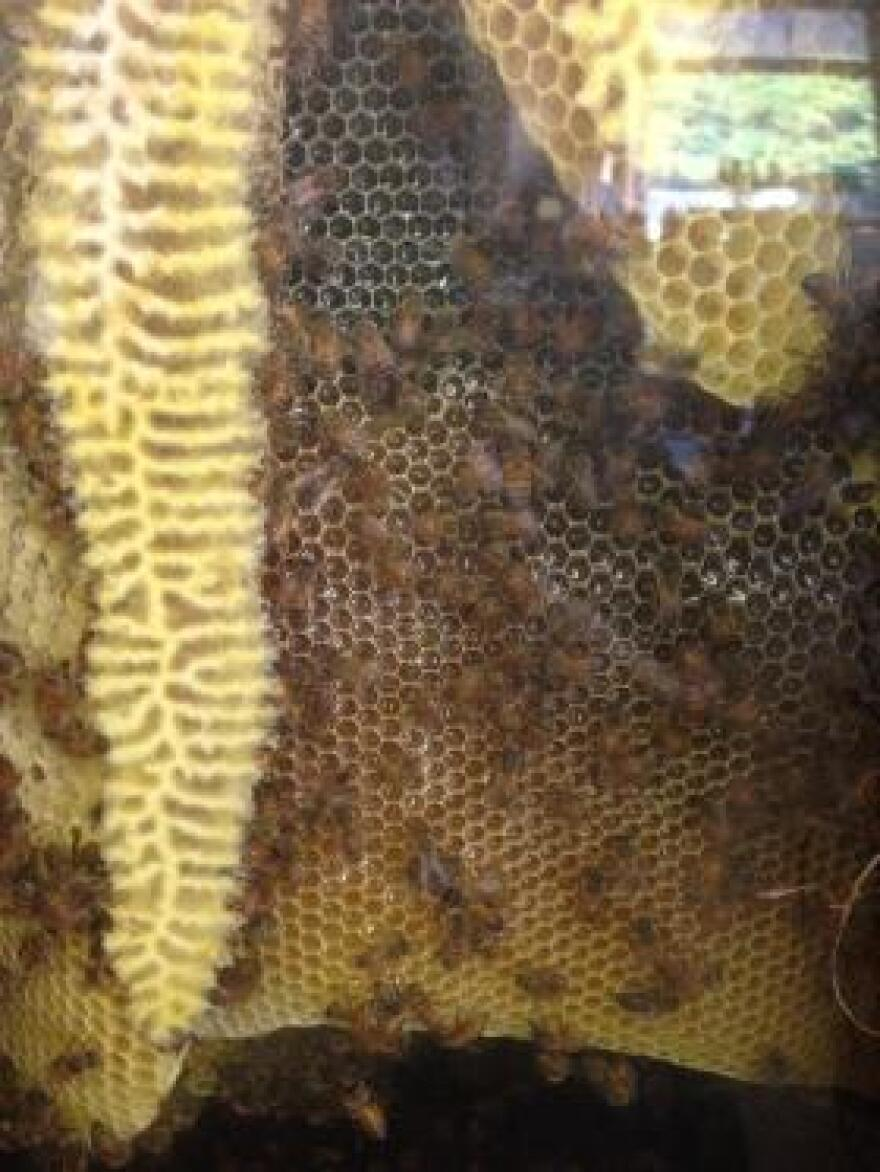A bee hive.