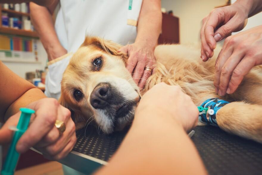 veterinarian_clinic.jpg