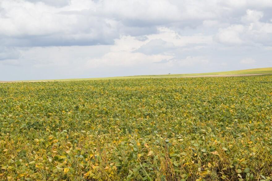 090418-am-harvest-soybeans1_0.jpg