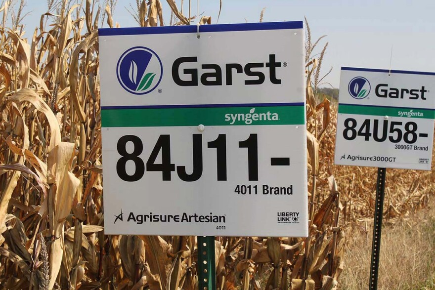 The Swiss seed company Syngenta bought the Garst brand in 2004. This field of drought-resistant corn was grown in Iowa in 2012.