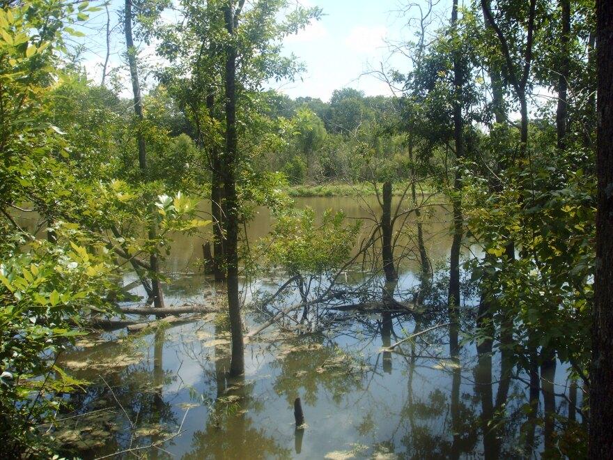 Texas wetlands