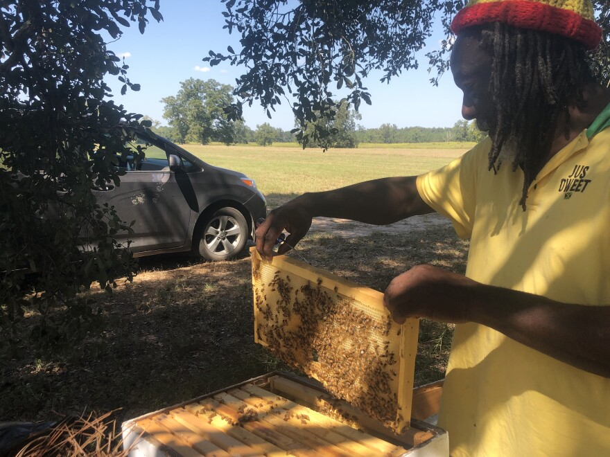 Beekeeper Decton Hylton shows a new honeycomb on the Resora farm – a project New Communities Land Trust started to showcase high value crops.