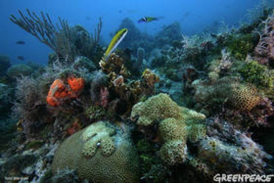 A NOAA study found that corals like these near the Dry Tortugas off the South Florida coast are likely to see widespread bleaching by the year 2030.