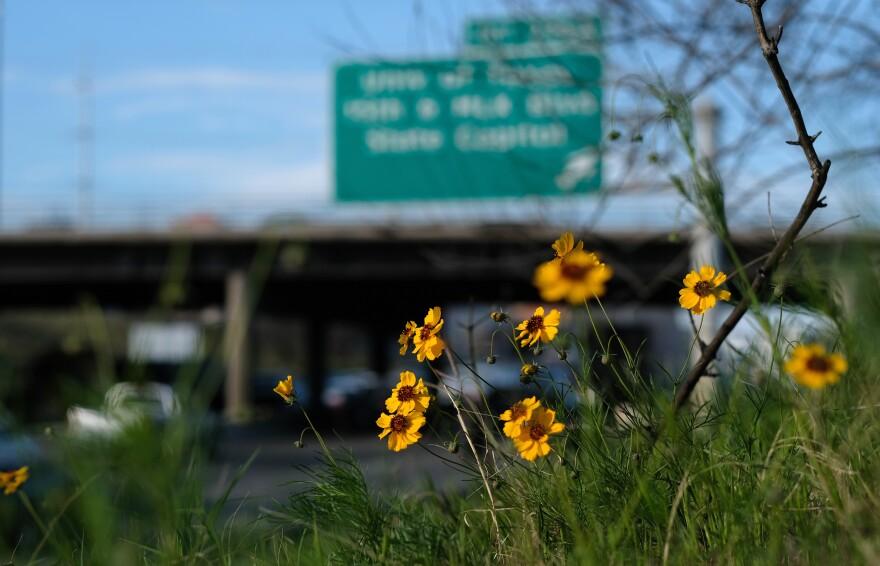 highway_flowers_01.jpg