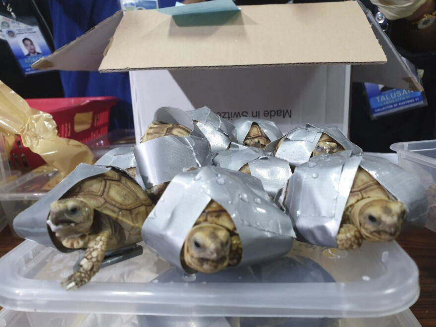 Filipino authorities said that they found more than 1,500 live turtles and tortoises stuffed inside luggage at Manila's airport.
