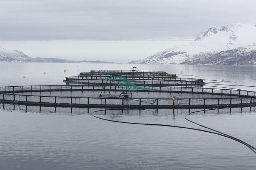 Aquaculture fish cages