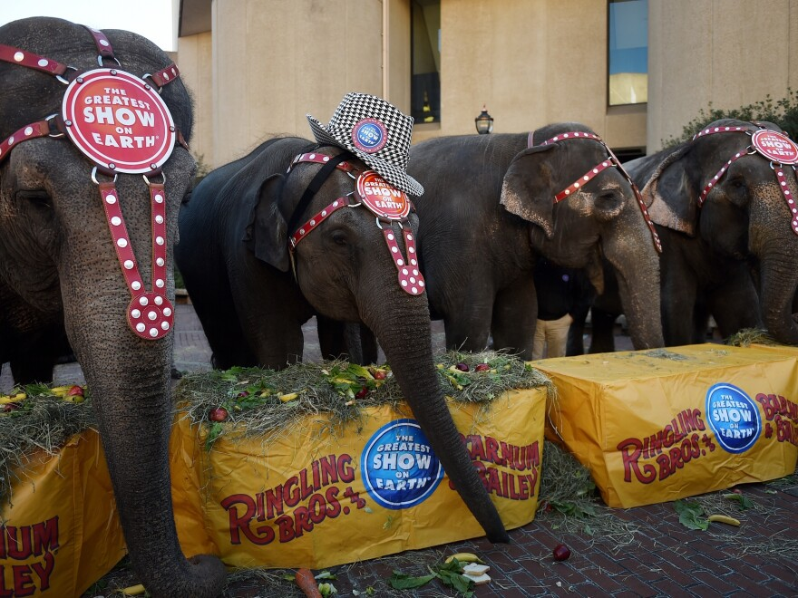 Elephant acts at Ringling Bros. and Barnum & Bailey Circus will be phased out by 2018, the circus' parent company said today. The elephants will retire to a conservation center in Polk City, Fla.