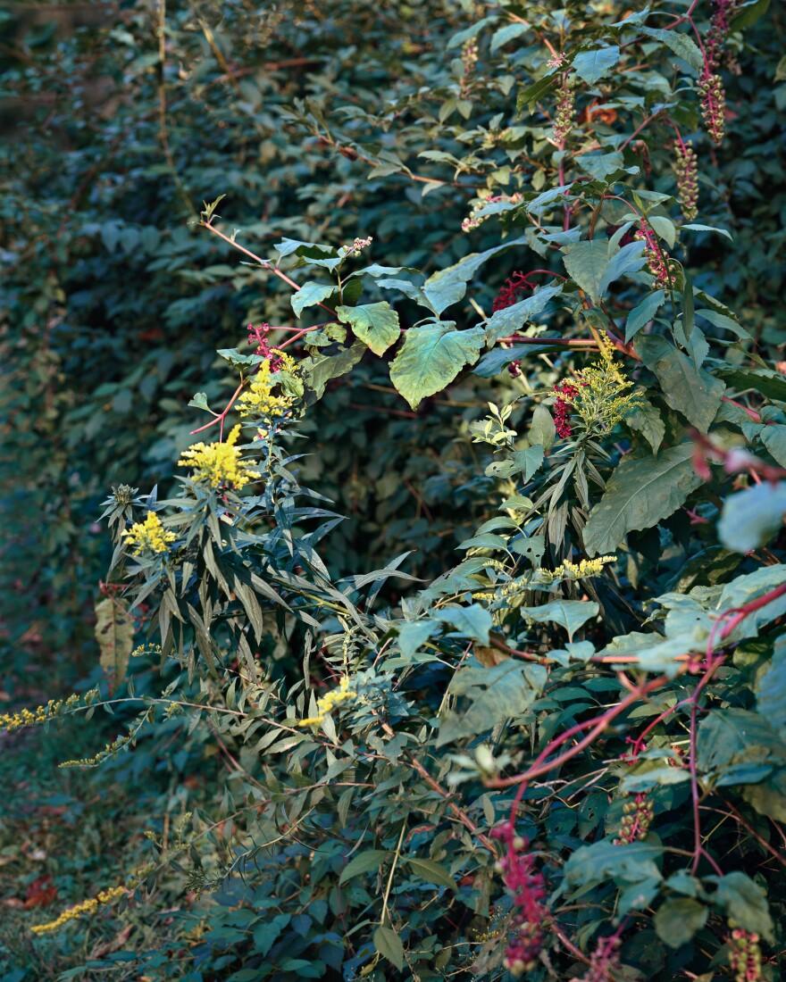 <em>Summer Wreath</em>, 2016