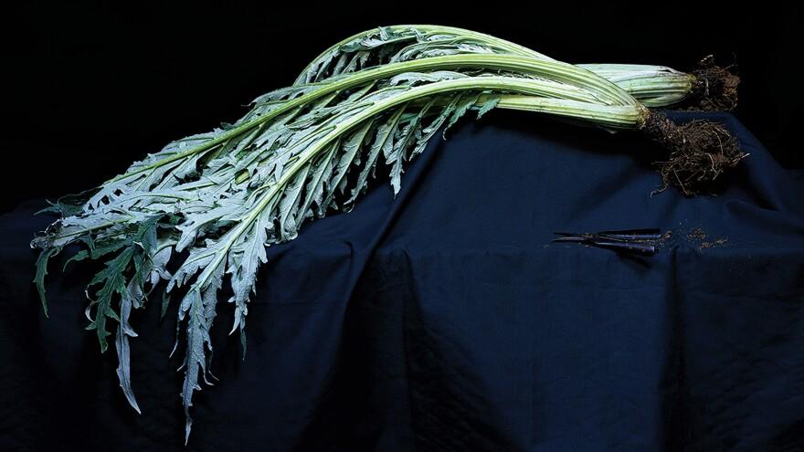 "The cardoon is like ""celery on steroids,"" says McLaglan."