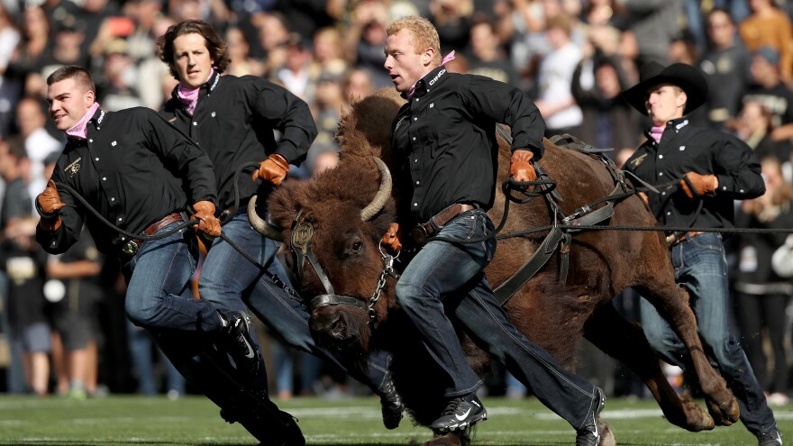 Ralphie V, mascot of the Colorado Buffaloes, is led onto the field before the team's game against the Arizona Wildcats at Folsom Field on Oct. 5 in Boulder, Colo.