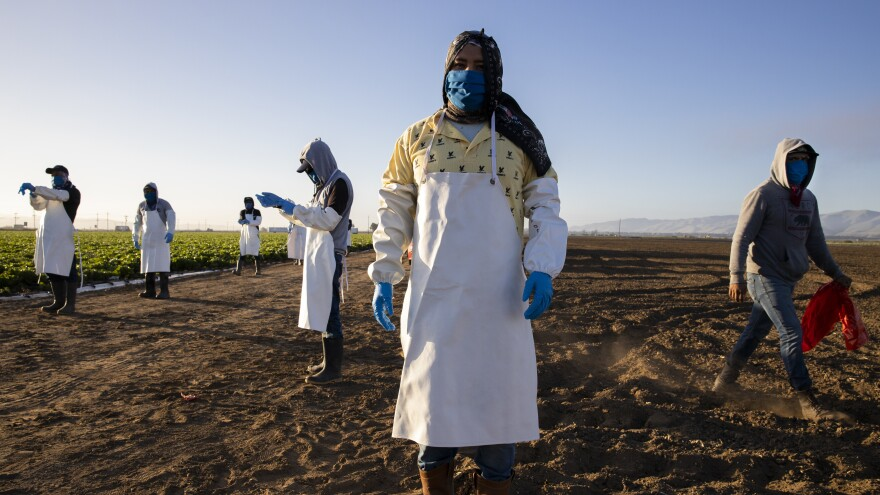 Before massive wildfires broke out in California, farmworkers already had to take extra precautions for COVID-19. Now they must worry about dangerous air from wildfires. In this photo, farmworkers arrive early in the morning to begin harvesting on April 28 in Greenfield, Calif.