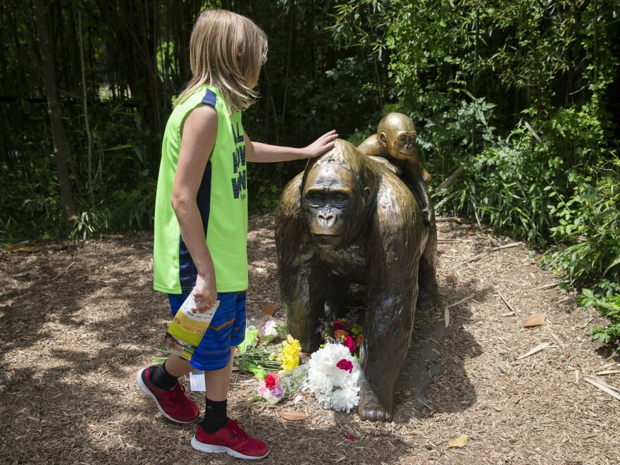 A child touches the head of a gorilla statue where flowers have been placed outside the Gorilla World exhibit at the Cincinnati Zoo & Botanical Garden, Sunday, May 29, 2016, in Cincinnati.