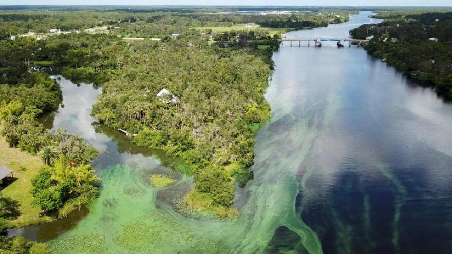 Blue-Green Algae Bloom in the Caloosahatchee River during the Summer of 2018