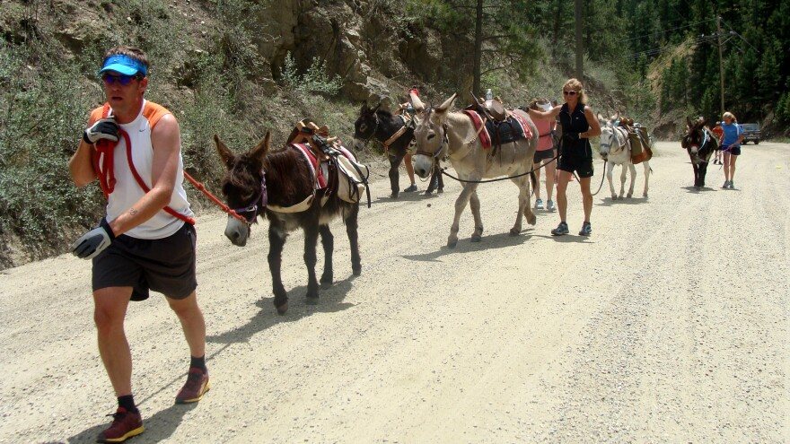 A skill in pack burro racing is convincing a donkey that it should run when it would rather walk. Racers may get behind the pack if they don't work with their animal.