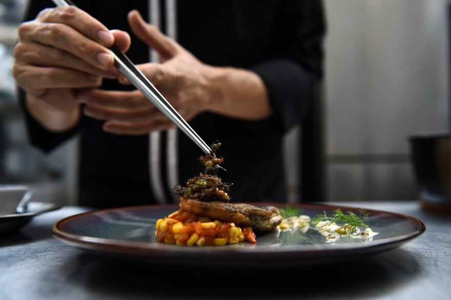 Edible winged ants are placed atop a fish fillet at Insects in the Backyard, a high-end bug-based bistro in Bangkok.