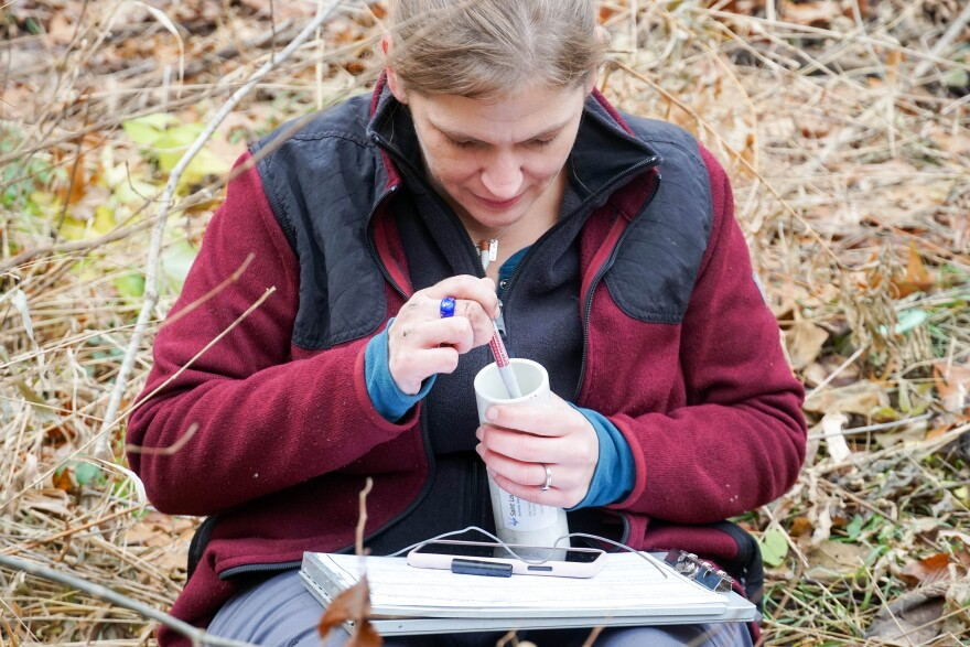 Zoo ecologist Jamie Palmer prepares to place temperature sensors over Pumpkin the turtle's location in Forest Park in November 2019.