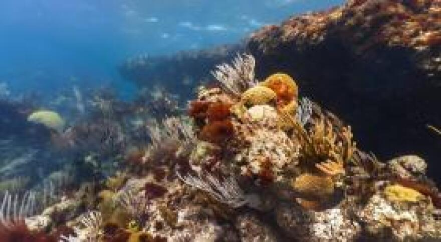 A still image from the Google Street View of the North East Breaker reef in Bermuda.