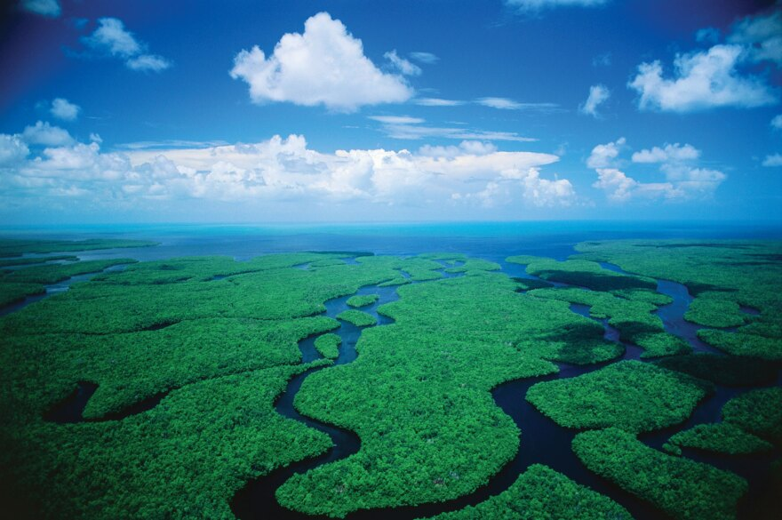everglades-large.jpg