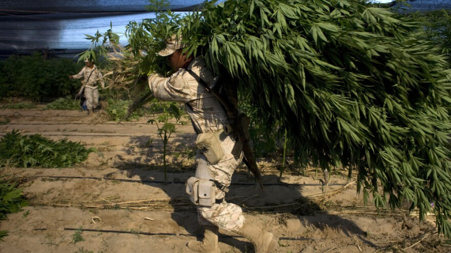 <p>A Mexican soldier carries a marijuana plant that was found on a large plantation in Baja California state, near the border with the U.S., on July 15. The U.S. military has been stepping up its assistance to Mexico in the fight against drug cartels. </p>