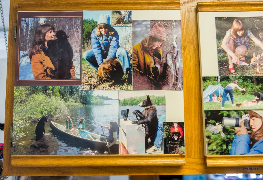 Photographs of Rogers' long relationship with northern Minnesota bears and other animals adorn one of the cabinets at his Wildlife Research Institute.