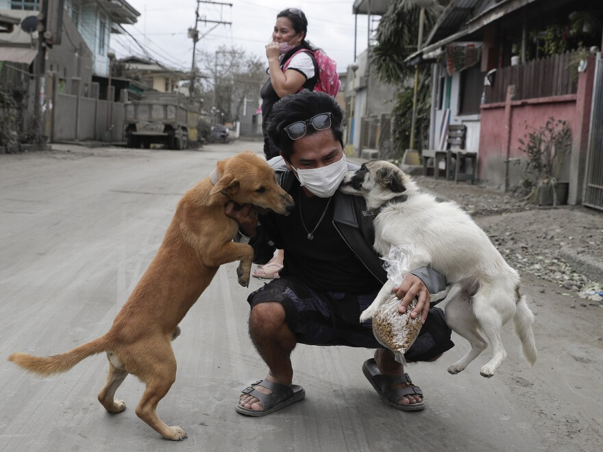 Dogs greet their owner as he returns to check his home at their volcanic ash-covered village in Talisay, Batangas province, on Wednesday.