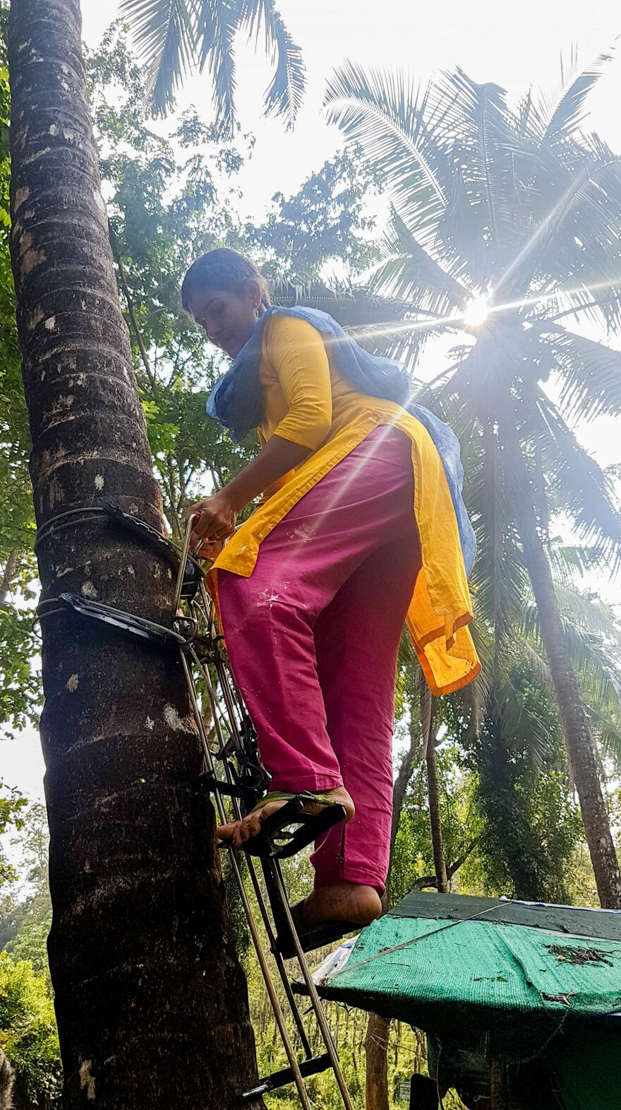 Joshba, 38, a coconut climber who like many people in South India goes by one name, demonstrates her tree-climbing apparatus on a coconut palm in Calicut district, northern Kerala.