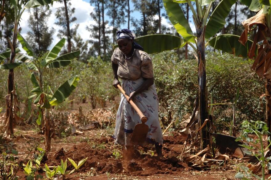 lady_farmer_in_Africa.jpg