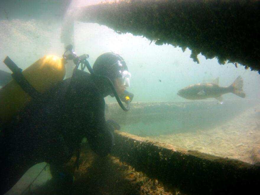 For veterans like Tim Maynard, scuba diving provides relief from symptoms of PTSD. Maynard goes diving once a week, exploring the Florida Keys and shipwrecks off the coast of North Carolina.