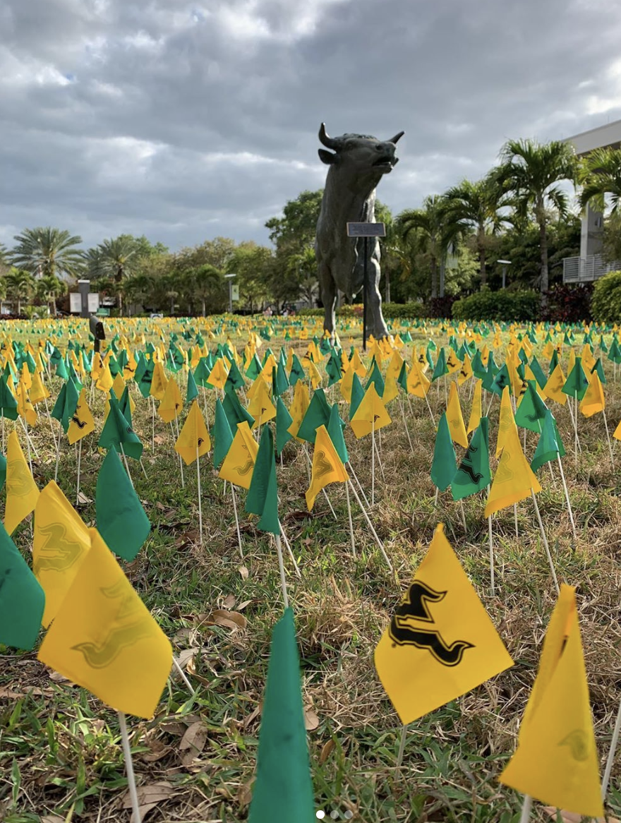 Green and gold flags planted in front of a bronze bull in front of the USF St. Petersburg campus
