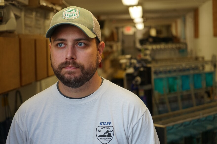 "Tim Lane, Virginia's southwest region mussel recovery coordinator, helps supplement endangered populations of freshwater mussels with ones raised here. ""We're doing the best we can,"" he says."