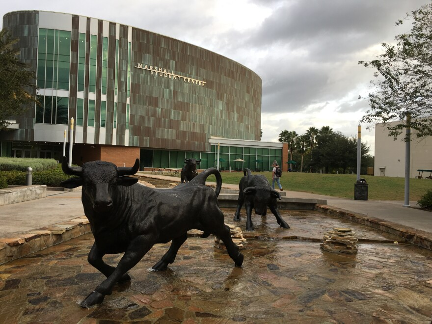 Bulls statues at Marshall Center on USF campus