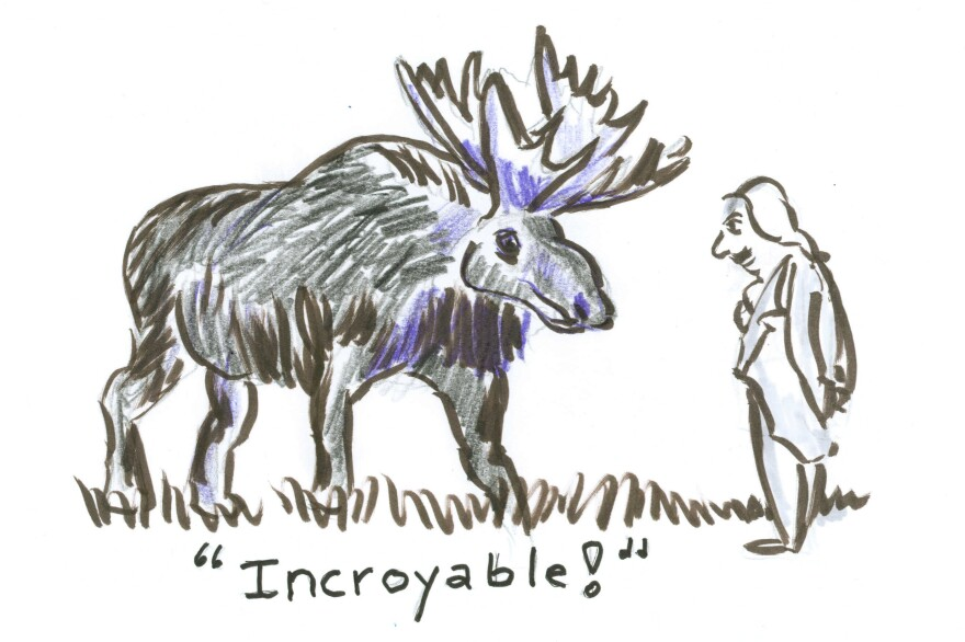 """A French gentleman staring at a moose thinking """"Incredible."""" Or """"Incroyable!"""""""