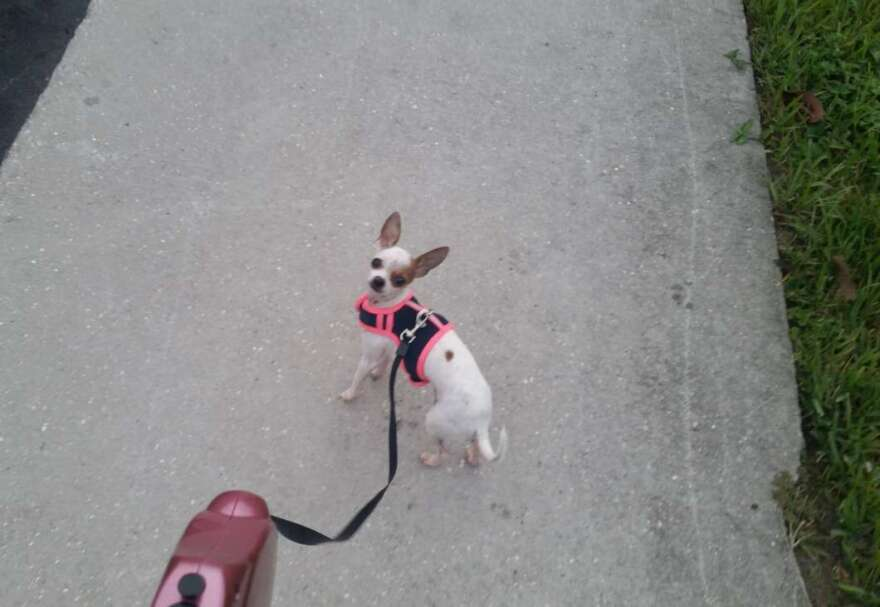 Chicky-walk.jpg