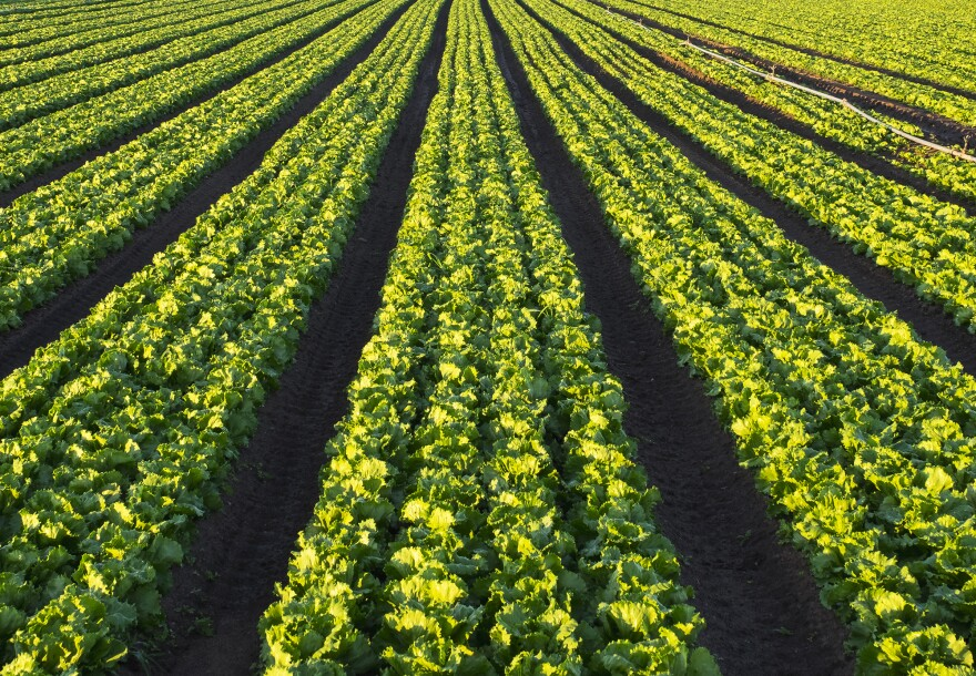 The Food and Drug Administration quickly identified romaine lettuce as the source of a months-long outbreak, but the foodborne illness investigation has been one of the agency's most complicated in years.