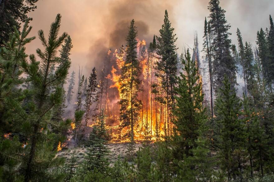 AP_Idaho_ForestFire.jpg