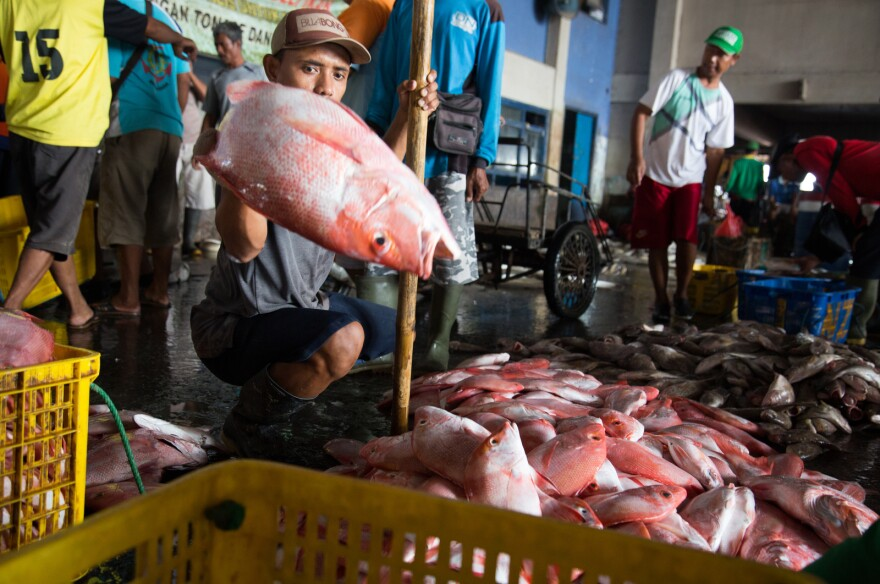 A man throws a snapper onto a pile in a fish market in East Java, Indonesia. For certain snappers, a market preference for plate-size whole fillets is driving fishermen to target smaller fish. For some wild fish populations, this is a recipe for collapse.