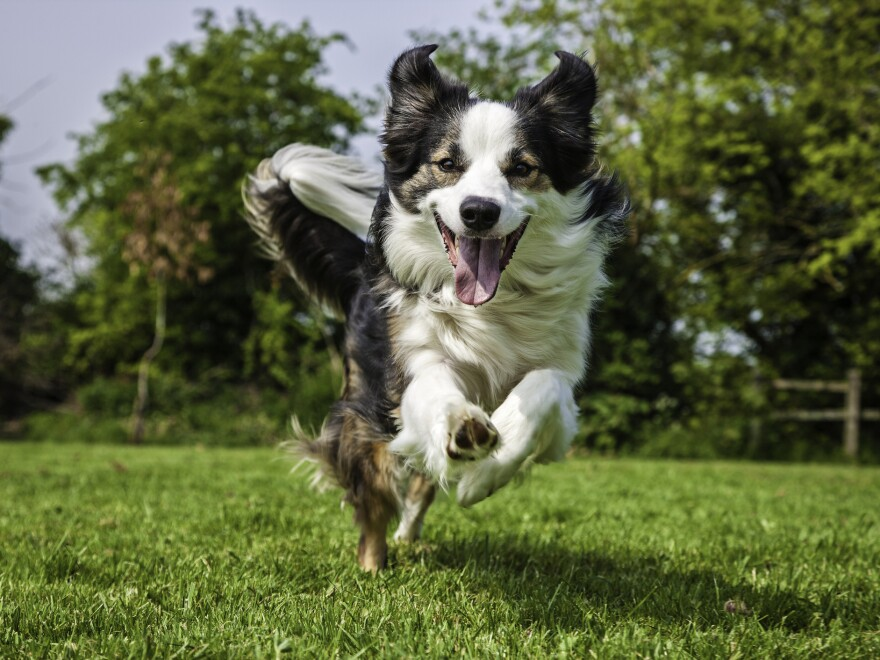 New data show that some dogs may match their owner's movements, says Barbara J. King.